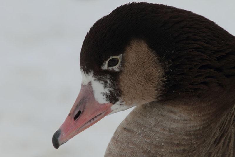 fåglar på vintern